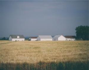 Farm Scene2
