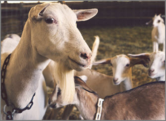 Family Farm Fun – Barnyard Animals