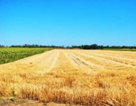 Family Farm History – Seed for Tomorrow