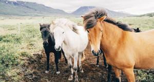 horses-farm-vacation2