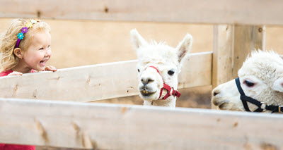 Farm Vacations with Kids
