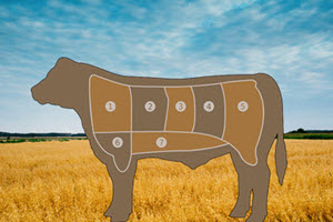 Farm History – Beef Production Part One